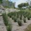 Grass Concepts
