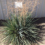 Dianella Baby Bliss