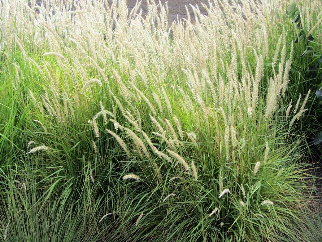 Fairy Tales Green Meadow Growers