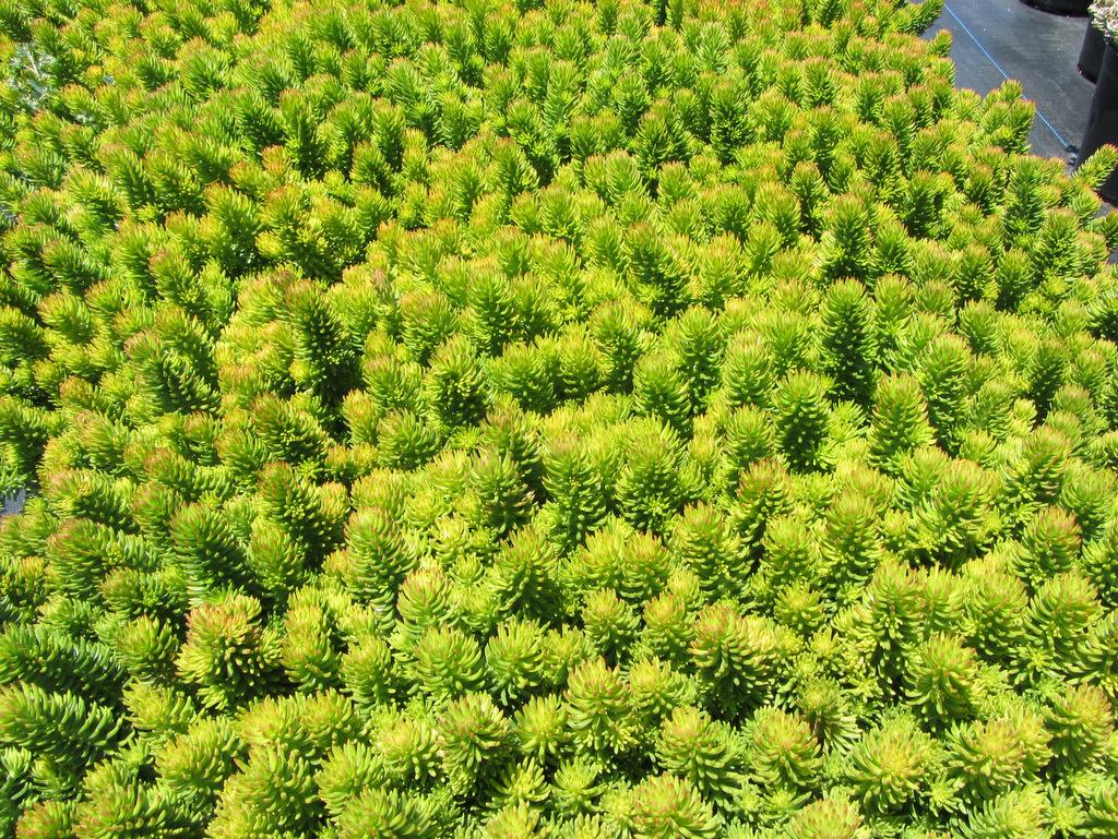 Plants Green Meadow Growers
