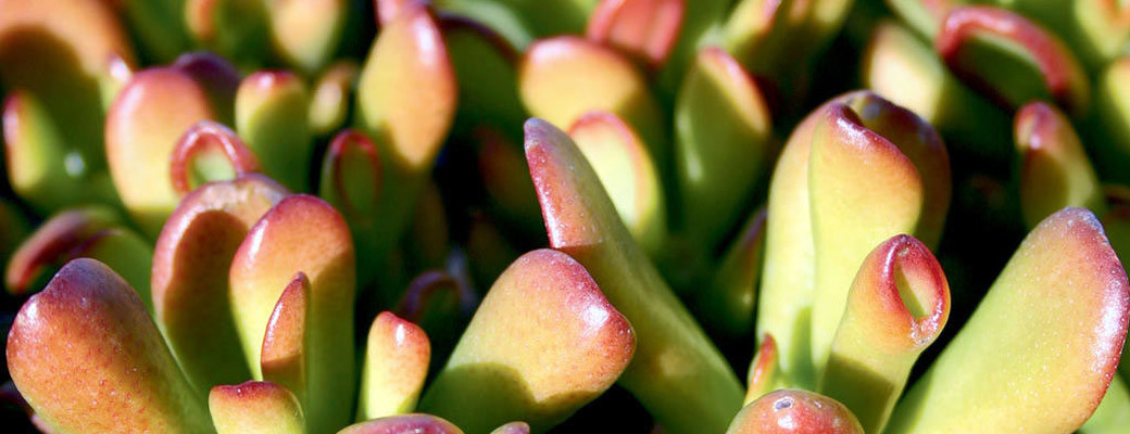 Green Meadows Growers - Savvy Succulents